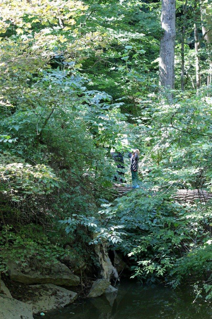 Crossing tree at Warren Dunes Michigan 2