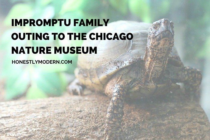 If we don't make time for ourselves and our families, who will? All our impromptu trip to the Butterfly Release at the Nature Museum in Chicago. It's a perfect stop for any family during a visit to Chicago.