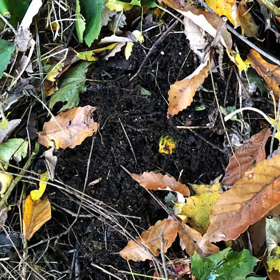 How To Compost At Home | Diversity in Dirt