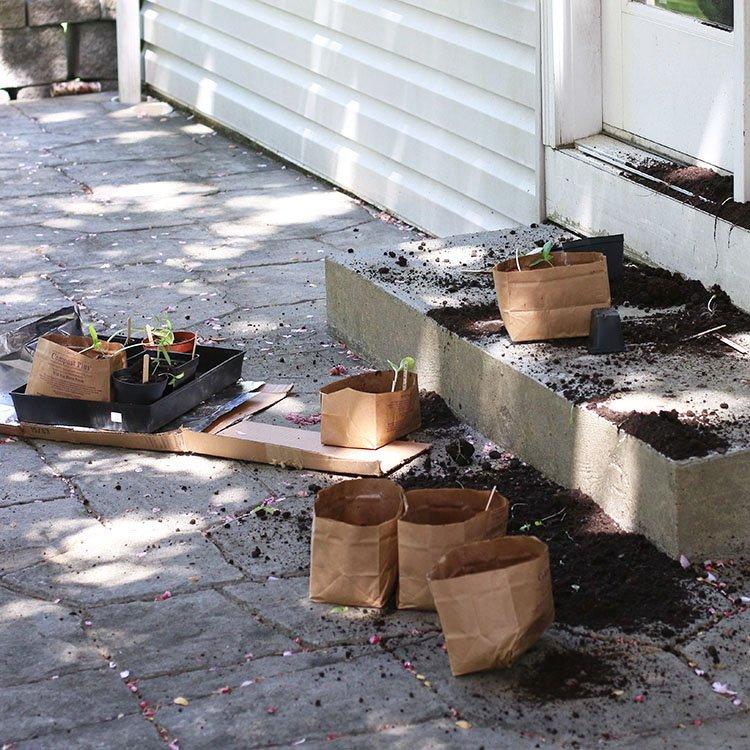 Garden Fail | Seedlings Sprinkled On The Patio