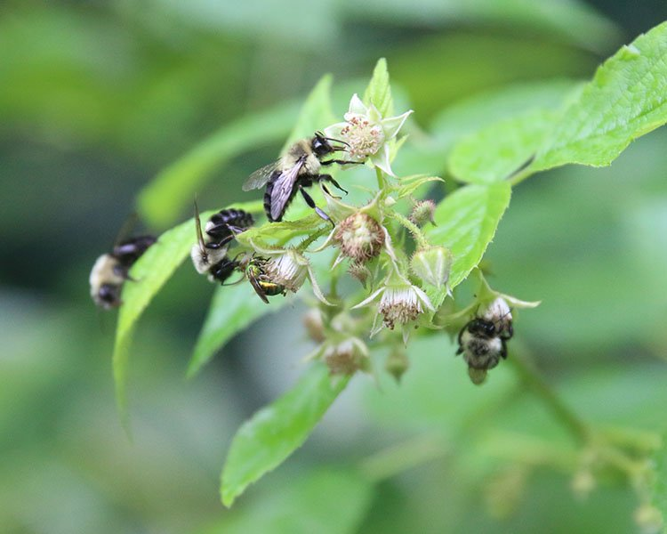 Our Honest Garden | Creating Spaces For Pollinators
