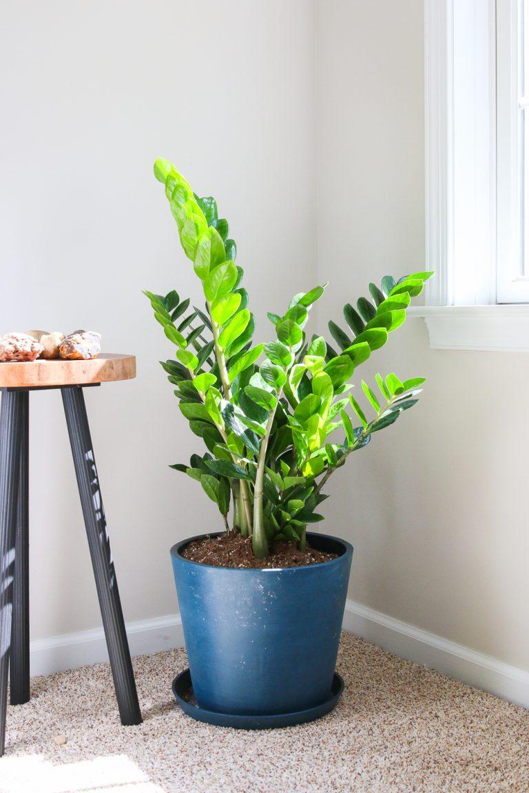 Unpaid Review of Bloomscape Online Plant Shop